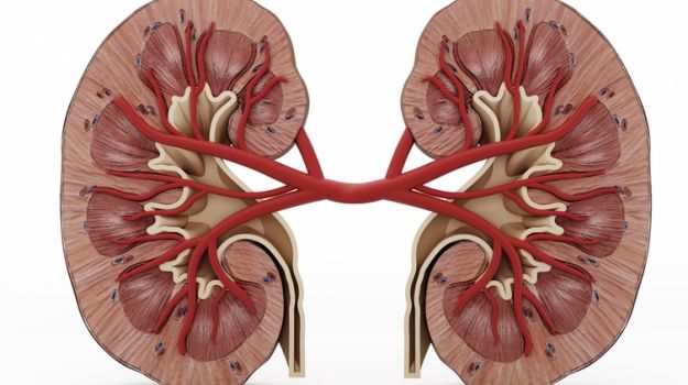 Wearable artificial Kidney should update conventional Dialysis