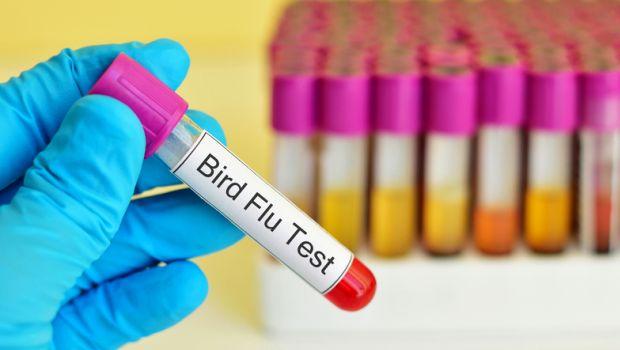 Bird Flu: Centre Asks NIHSAD to Expedite Testing of Samples