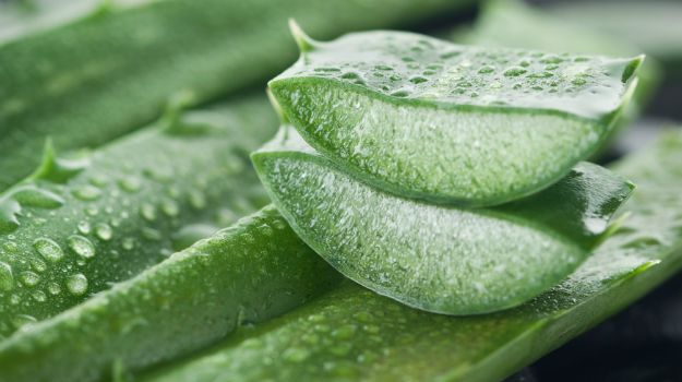 5 Ways to Use Aloe Vera to Rejuvenate Your Skin and Hair