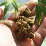 Weed smokers, marijuana may triple your chances of dying from high BP