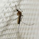 What is super malaria or superbug?