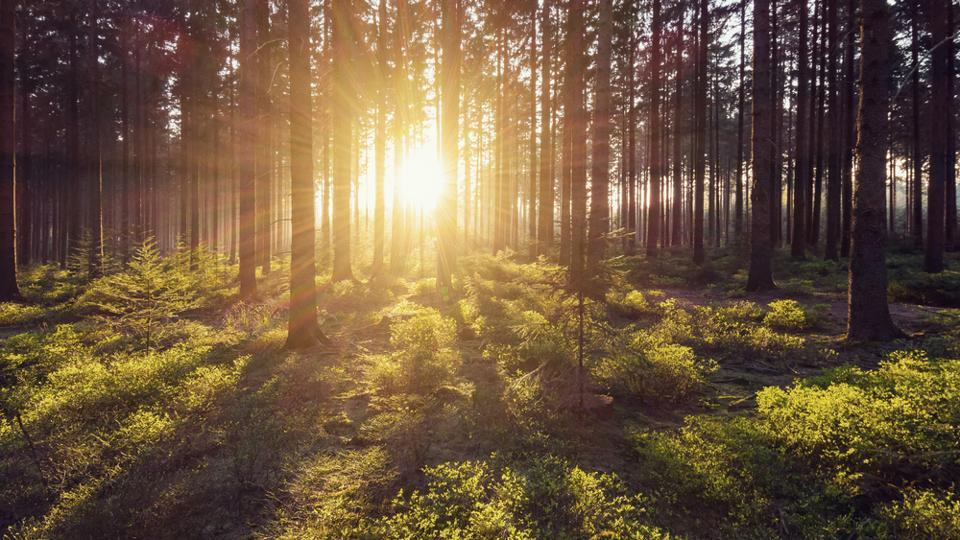 Living near trees makes people less stressed by boosting their brain